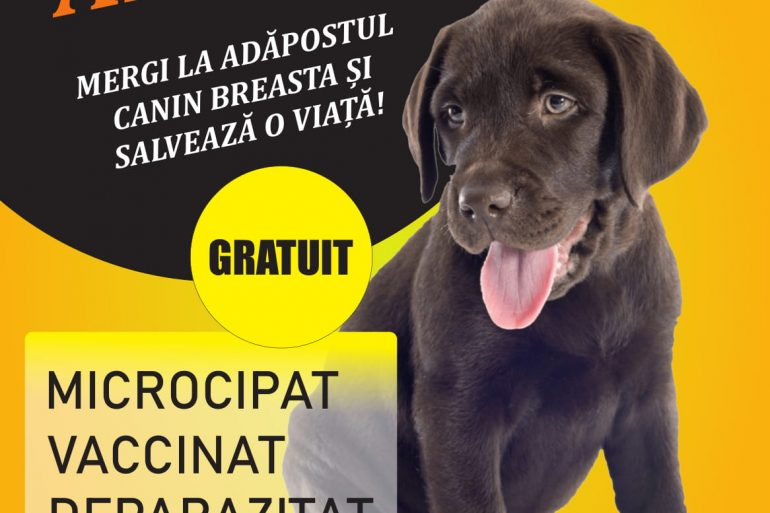 Campanie de promovare a cățeilor fără stăpân din Adăpostul Breasta, în luna octombrie